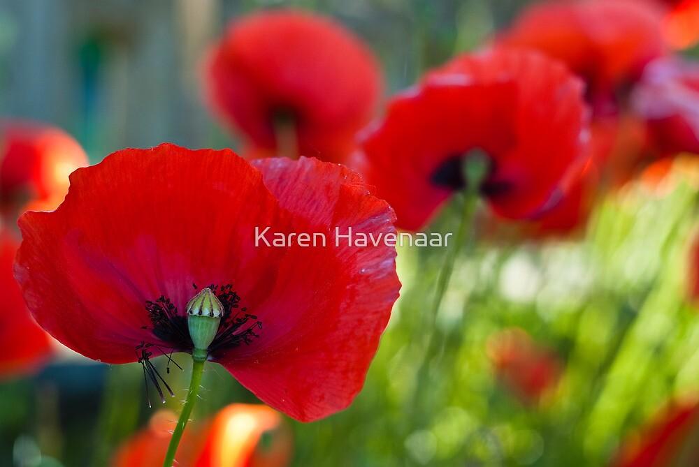 Red all over the Place by Karen Havenaar