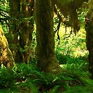 Rain Forest Green by Barbara  Brown