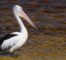 Percy the pondering pelican by georgieboy98