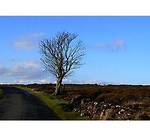 The Lonesome Tree Photographic Print