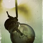 Sun globe by stevekellyphoto