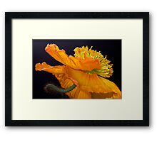 Flamenco Flares Framed Print