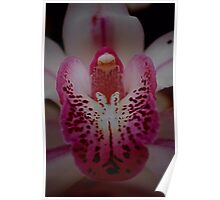 Nanna's Orchid Poster