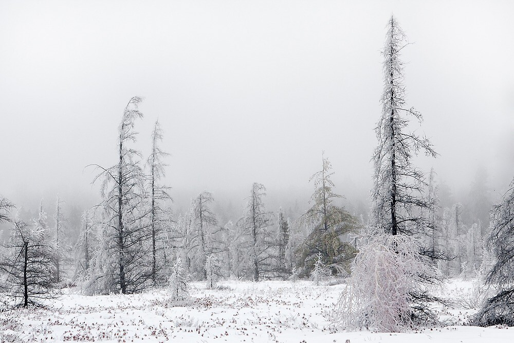 Ice storm aftermath by Daniel Cadieux