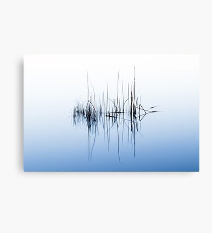 Reeds in Lake Burley Griffin - Colour Canvas Print