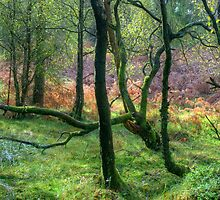 The Encircling Wood by Jamie  Green