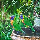Parrots in Pairs by Clare Colins