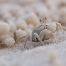 Sand Bubbler Crab by Lesley Williamson