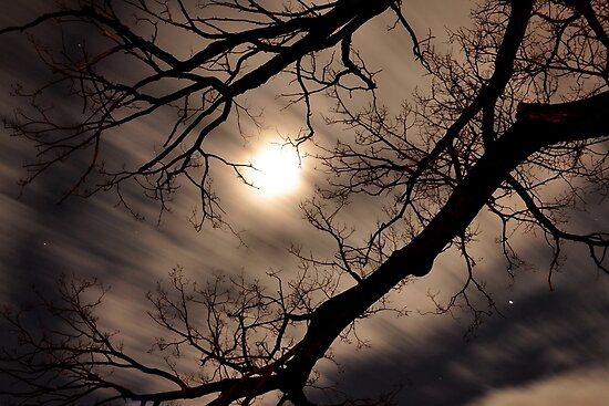 moonlight by Anthony Hennessy