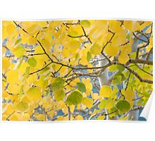 Golden leaves in RMNP Poster
