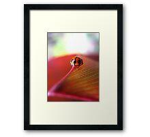 Ladybird on Cordyline Framed Print