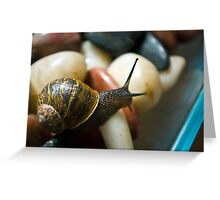 Macro Garden Snail Greeting Card