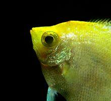Underwater World : Profile In Yellow by artisandelimage