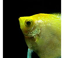Underwater World : Profile In Yellow Photographic Print