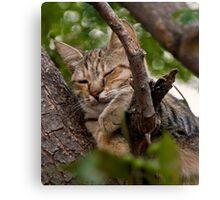 Grecian Cat Nap Canvas Print