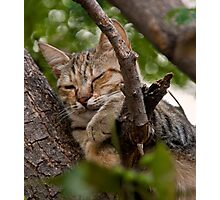 Grecian Cat Nap Photographic Print