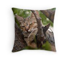 Grecian Cat Nap Throw Pillow