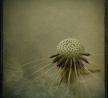 Some Keep Holding On by Mojca Savicki