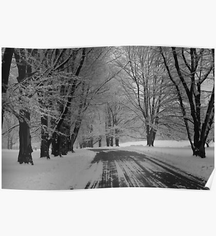 Tree-Lined in Winter Poster