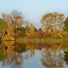 Morning Reflections by Diane Trummer Sullivan