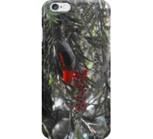 Scarlet honey eater iPhone Case/Skin