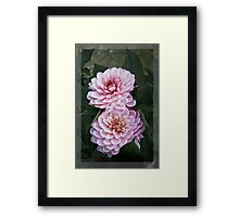Garden art - dahlias in the dark Framed Print