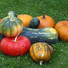 Beautiful Pumpkins - Kürbis by Lee d'Entremont
