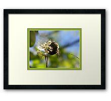 """Sammy's Bumble Bee"" Framed Print"