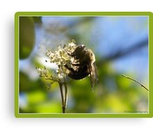"""Sammy's Bumble Bee"" Canvas Print"