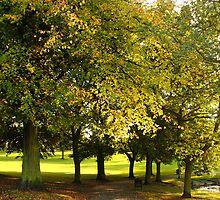 Autumn Colours by Paul Bettison