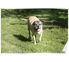 Flying Mastiff Clear The RunWay! - 10 Poster