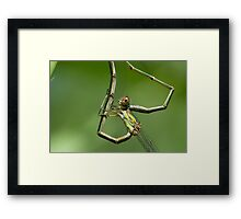 Hanging on (emerald couple) Framed Print