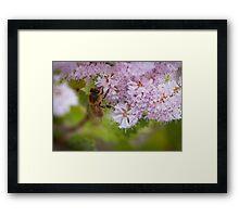 Bee Wonderland  Framed Print