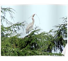 Great Blue Heron Nest Offering Poster