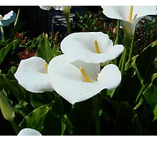 Lilies of the Field Photographic Print