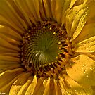Sunflower  .  tribute to Sun of Jamaica .  My rememberance  by  Brown Sugar . by AndGoszcz