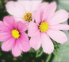 Pretty in Pink by J.K. Sanchez