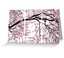 Cherry Blossoms- The Panel Series Greeting Card