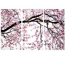 Cherry Blossoms- The Panel Series Photographic Print