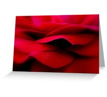 red rose close up soft focus. Greeting Card