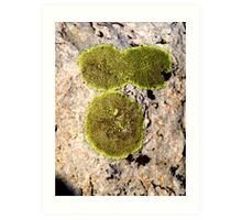 there's even beauty in the ugly green moss Art Print