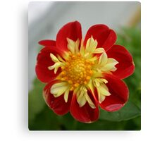 flower enhanced Canvas Print