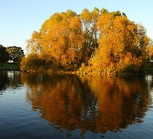 Autumn Colours on Reflection by Paul Bettison
