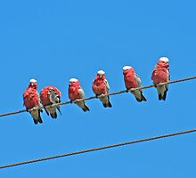 Birds on a Wire by Bradd Munn