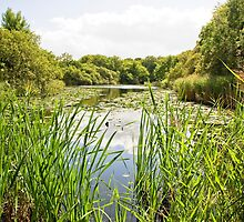 Epping Forest by Pauline Tims