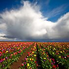 April Showers April Flowers by Darren White  Photography