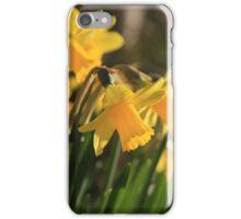Yellow Spring Daffodils iPhone Case/Skin