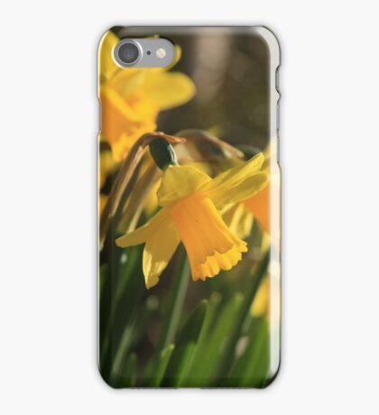 Yellow Spring Daffodils iPhone Case/Skin