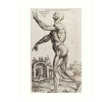 From INFLUENCE AND ESSENTIAL TREATY OF ANATOMY ANTIQUE(1543) Art Print