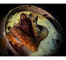 Octopus in a beer can Photographic Print
